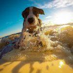 Come fare le vacanze estive senza rinunciare al tuo cane o al tuo gatto